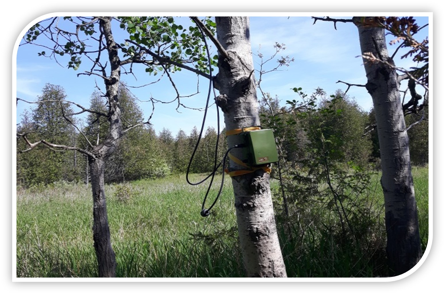 Bat Acoustical Monitoring equipment attached to tree.